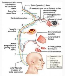 Mesta na uvreda na-licevija-nerv
